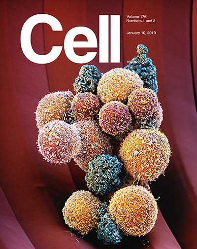 Martin`s small world — or how to make a cover story for Cell