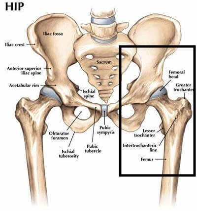 Ever Have Hip Pain Read This To Find Out What It Is