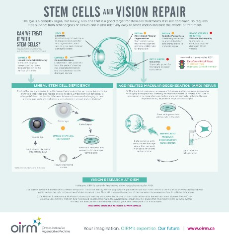 a description of a stem cells which has the ability to divide for indefinite periods in culture Stem cells are cells that have the ability to divide for indefinite periods in culture and to give rise to specialized cells the effects of stem cell research.