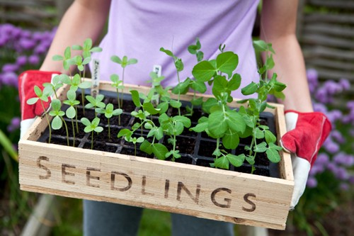 What Is Garden Seed Box?
