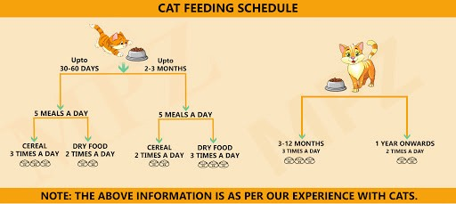 A simple guide to feed your cat marshallspetzone medium