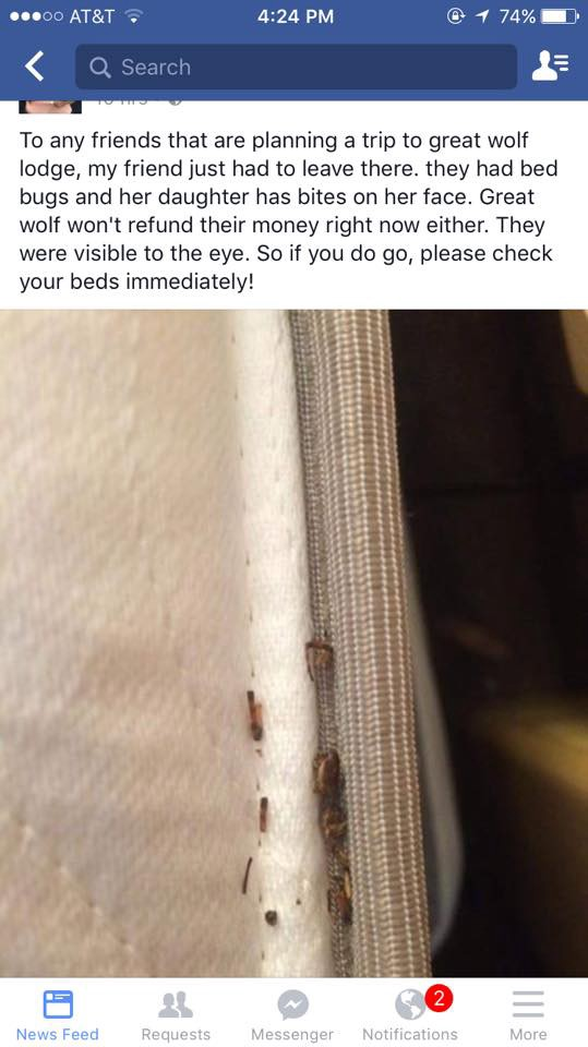 Delightful Great Wolf Lodge, Massachusetts Fights Viral Facebook Post On Bed Bug  Claims. Http://ift.tt/29vsNdR;http://pic.twitter.com/ssehdTtp22