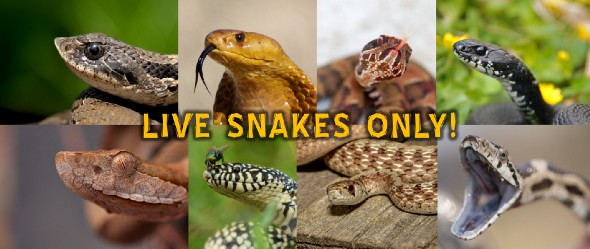 LIVE Snakes Identification & Discussion