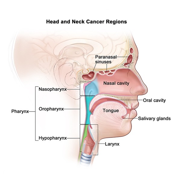 Be Careful While Making An Appointment With A Head Neck Cancer Surgeon
