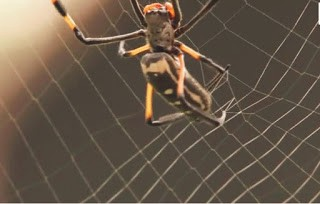 Can spider build Webs in Space-