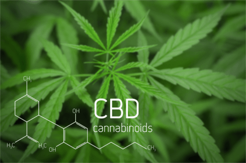 0*oYb1Ly V FrtcdCx - What is the Endocannabinoid System?