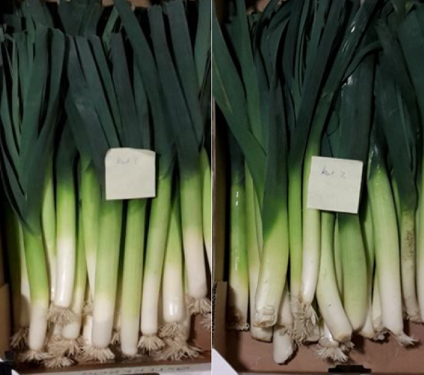 Two images of spring onions in boxes, one box having a different label to the other
