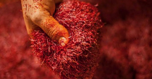 Do you know many small and minor kind of diseases are cured with saffron