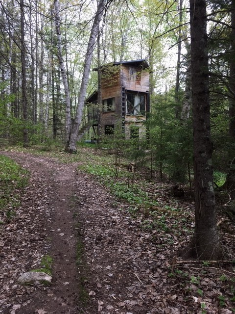 Ten Minutes With Carol Dunbar, a Ghostwriter Who Lives in the Woods