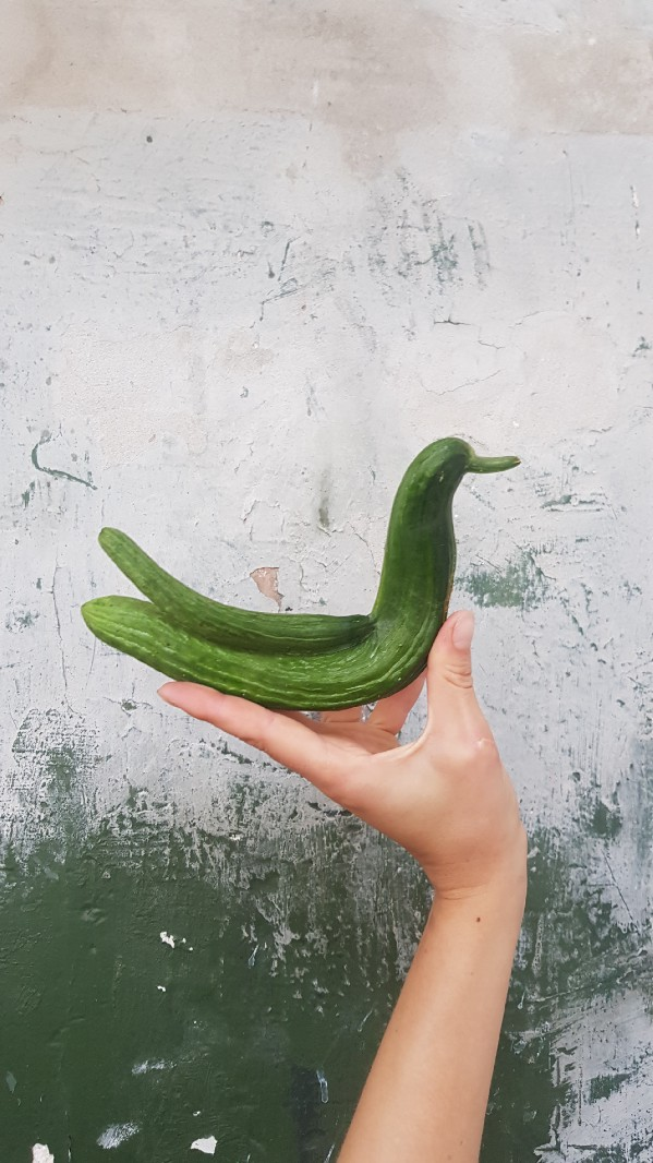 A person holding a cucumber which looks like a duck or bird