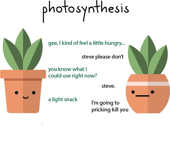 a story of two CAM plants