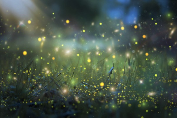 AccordingtoFred: The Future of Project Firefly: B2B and B2C Expansion by Mihai Corlan https://t.co/LSiuXYp5pt nn#AdobeSummit #ProjectFirefly #AdobeDev