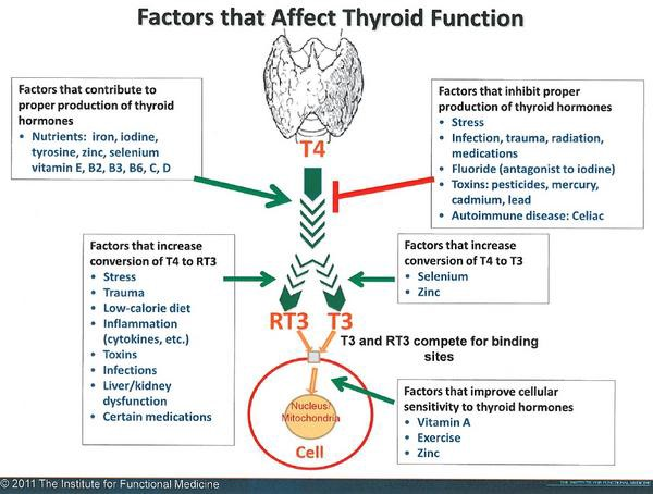 stress and thyroid trouble Heard about wilson's syndrome back in 2002 doctors tested me, told me i had no thyroid problems stress can lead to thyroid issues.