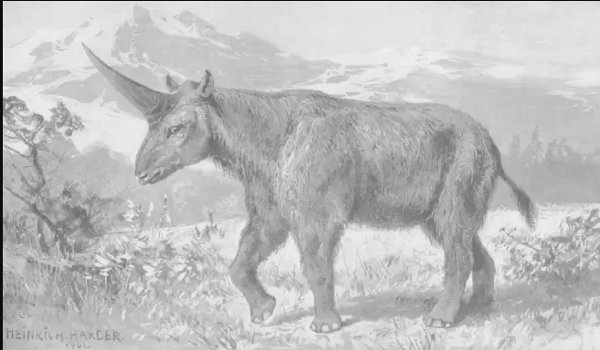 A reconstruction of what a Siberian unicorn might look like, by Heinrich Harder in 1908 — Heinrich Harder/Wikimedia Commons