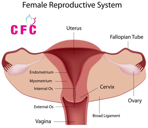 Energy Excercise To Open Blocked Fallopian Tubes Naturally