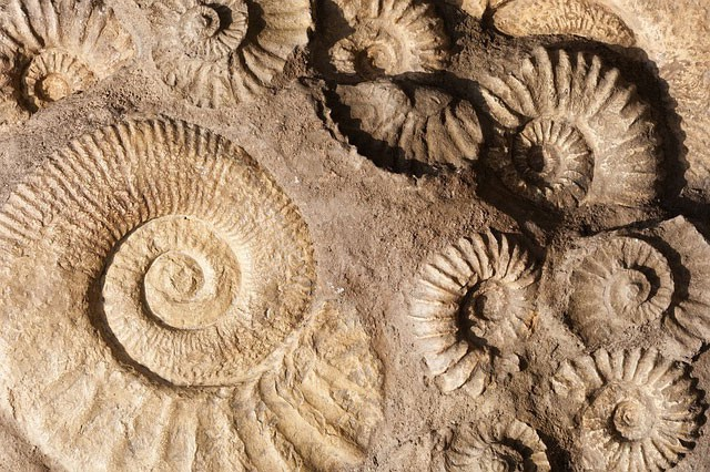 Two methods used for dating fossils