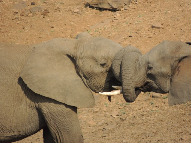 Elephant love dating and relationships