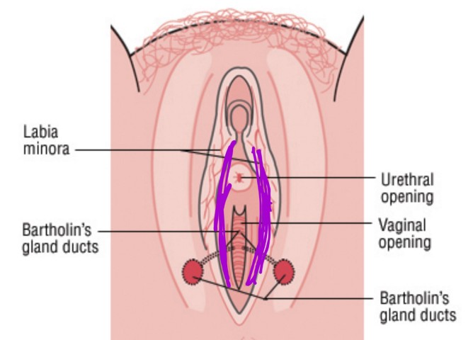 Cancer stores on the vagina
