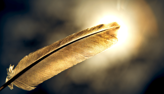 Feather against the sun. You want to follow your dreams?