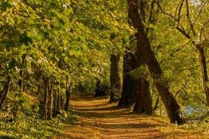 forest-path-1743333_1920