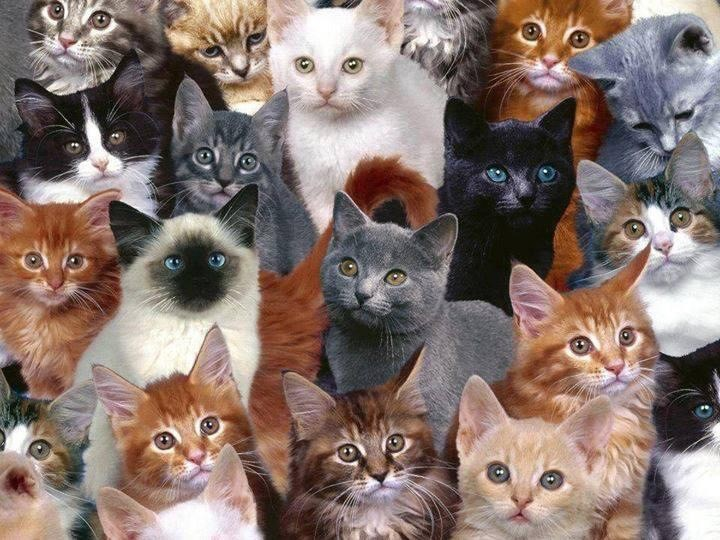 Image result for group of cats