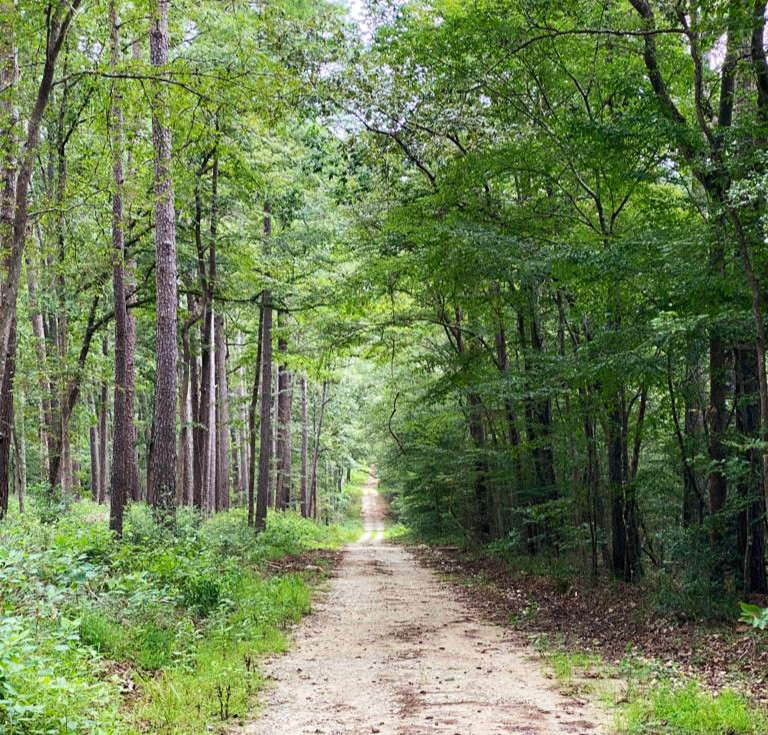 Data Science 101: A Walk in a Random Forest