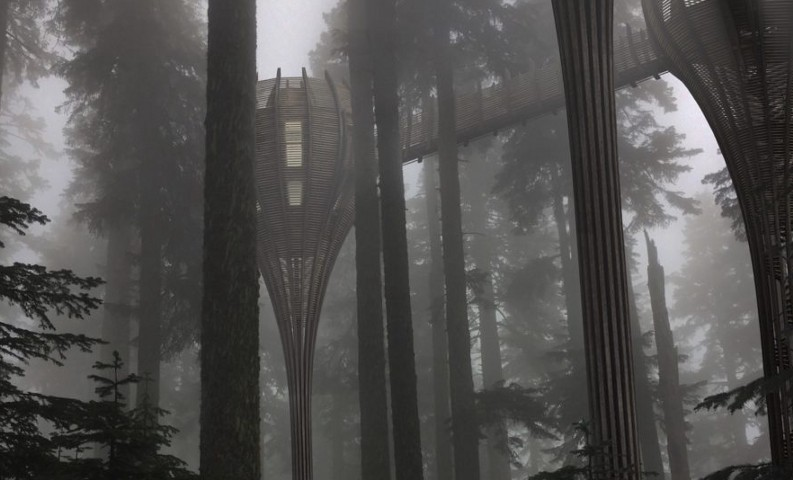 A Stairway To Heaven: Gibbon's Trine Treehouse Is Any Ewok's Dream