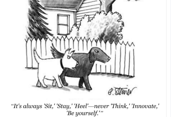 innovation-dogs