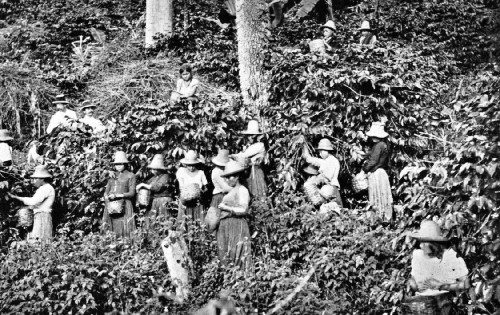 Farmers picking coffee beans outside of Bogota, Colombia (2)