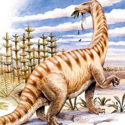'Startling' dinosaur protein discovery