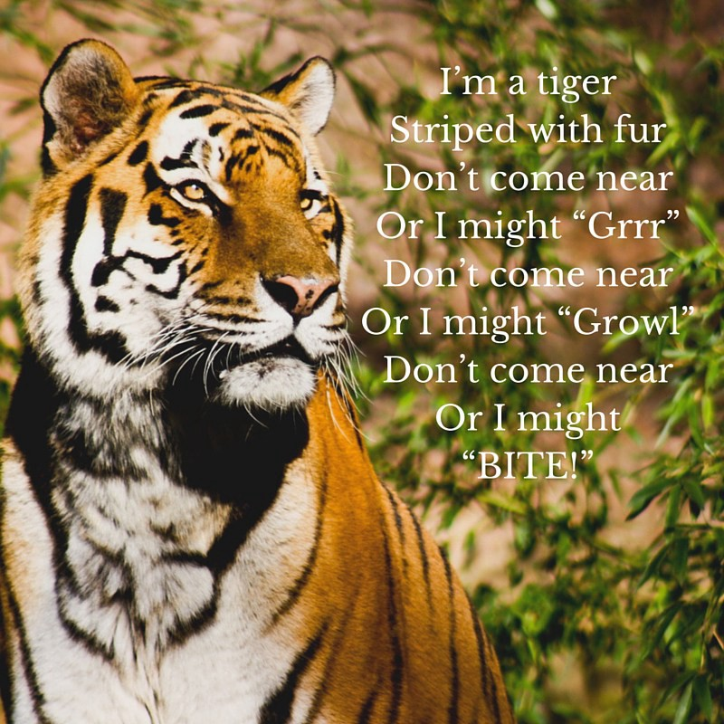 Today Being International Tiger Day A Of Both Celebration And Awareness Let Us Get Perspective The State Future Especially With