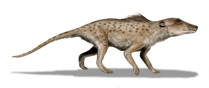 Ancient hoofed land ancestor of the whale