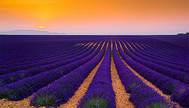 Amazing-Picture-of-a-Lavender-Field-at-Sunset-By-Tomas-Vocelka
