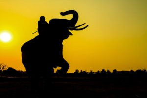Agile autonomy: Complexity, confusion, and dysfunction: Managers and Agile and Riding an Elephant