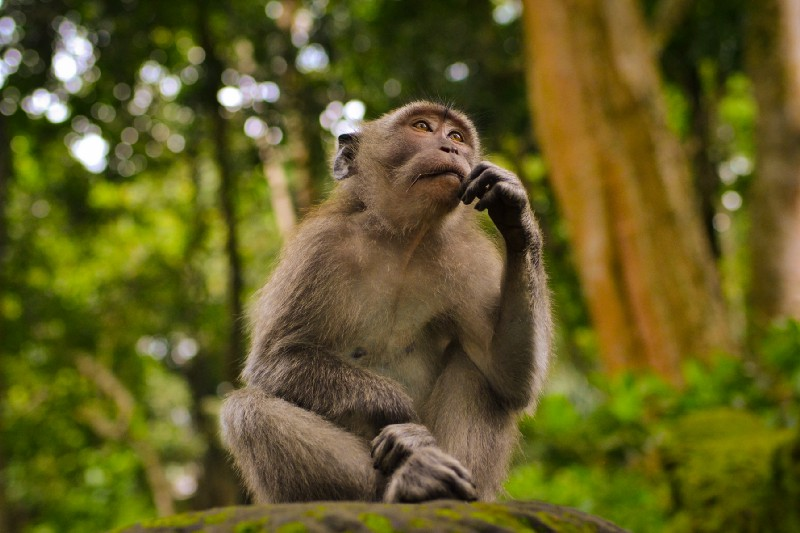 Photo by Juan Rumimpunu on UnsplashSmall monkey appearing to be deep in thought