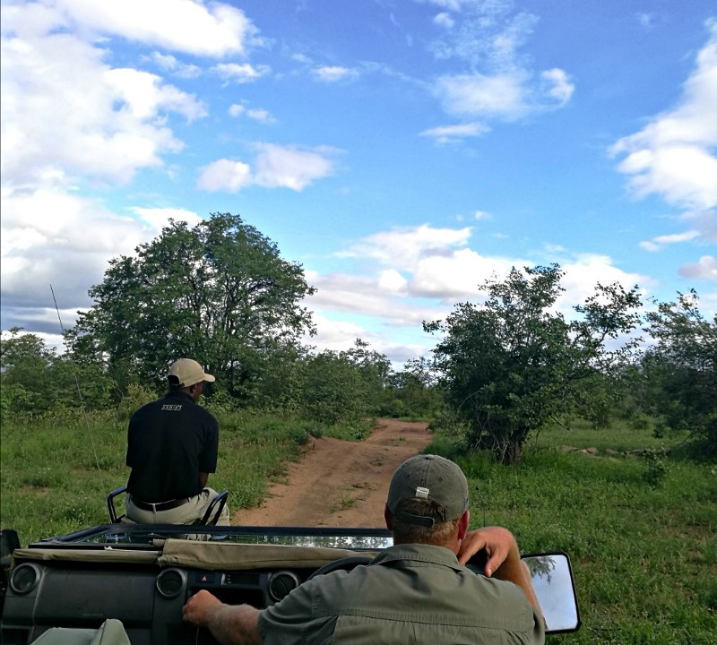 Tracker and guide on safari in jeep