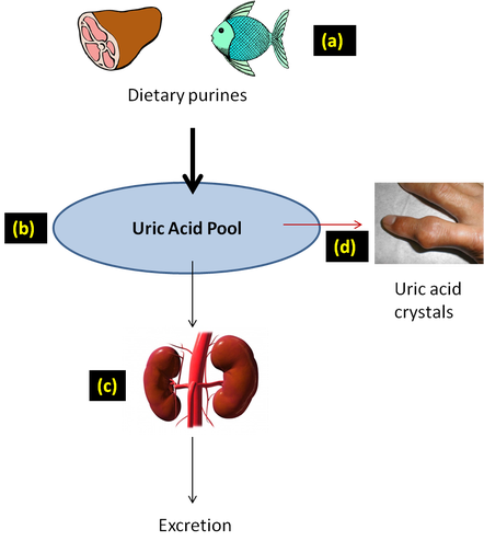 food diet to reduce uric acid remedies for ankle gout management of gout in the presence of chronic kidney disease