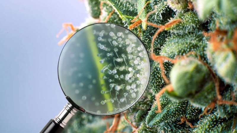Magnifying glass  help you see the bud