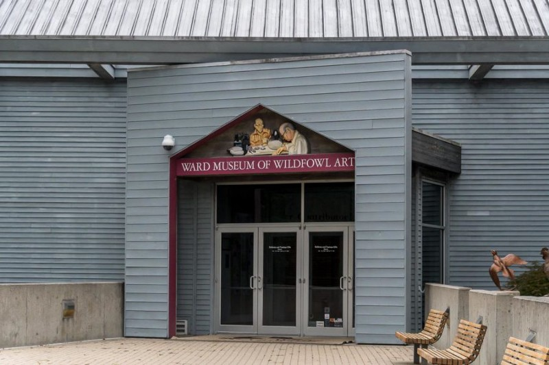 Entrance to the Ward Museum of Wildfowl Art, full of carved wood ducks and wood carved wildfowl