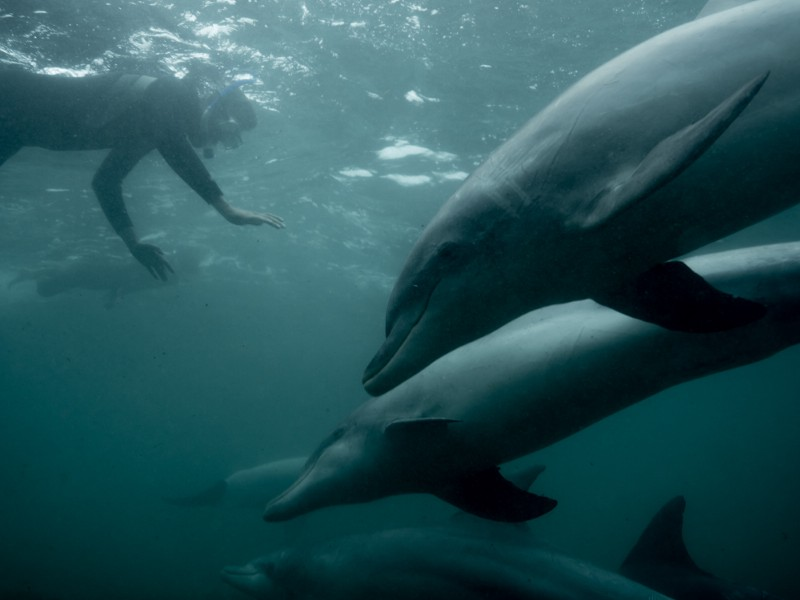 Swimming with dolphins at Baird Bay, South Australia © Michaela Skovranova / Greenpeace