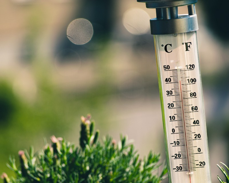 outdoor thermometer nestled in pine