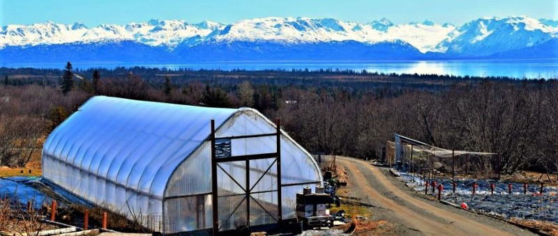 Thinking of WWOOFing in Alaska this Summer? « WWOOF-USA