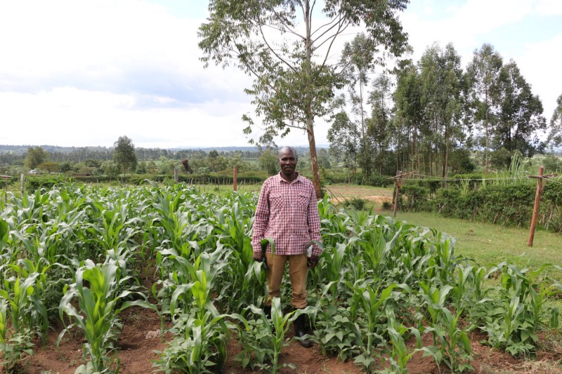 A farmer stands in his field, surrounded by green plants, about knee-high