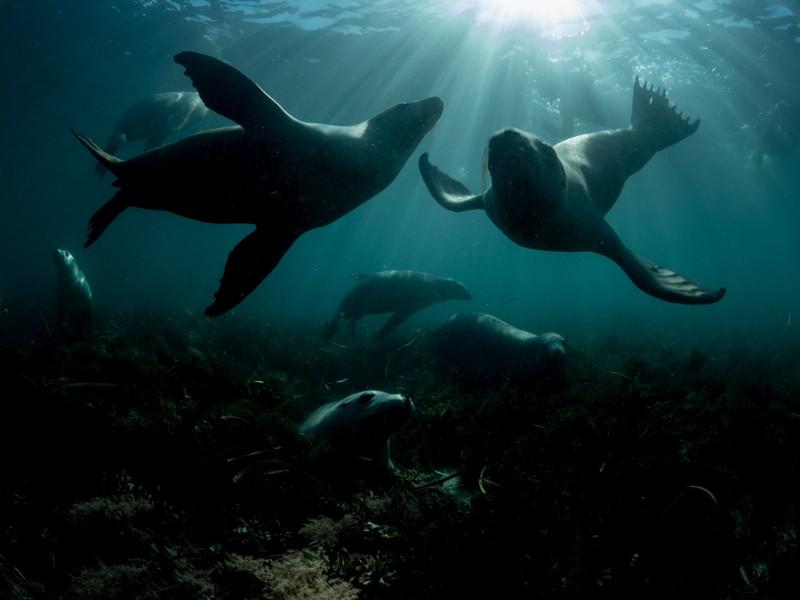 Sea Lions at Hopkins Island © Michaela Skovranova / Greenpeace