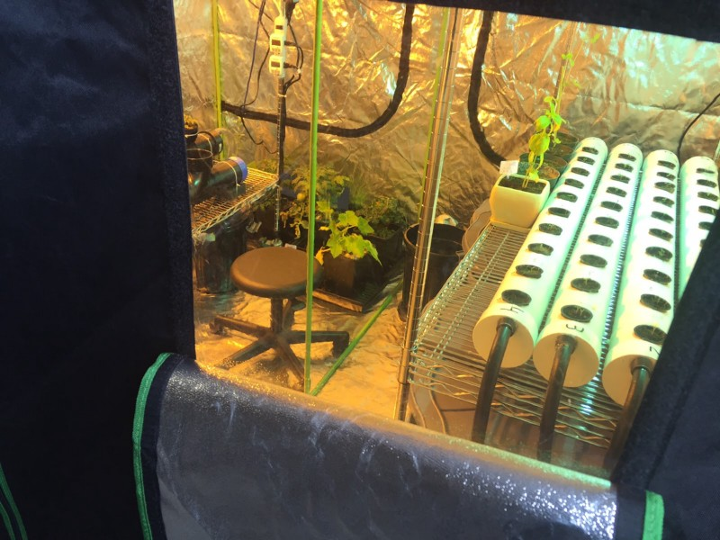 Image of the interior of Grobo's growing tent. There is a stool, plants, and growing supplies inside