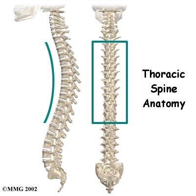 1*3dHcFUnjFqCy8UxGXpXWOA - The Magic of T- Spine Extension