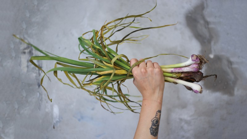 A person holding a handful of wild garlic