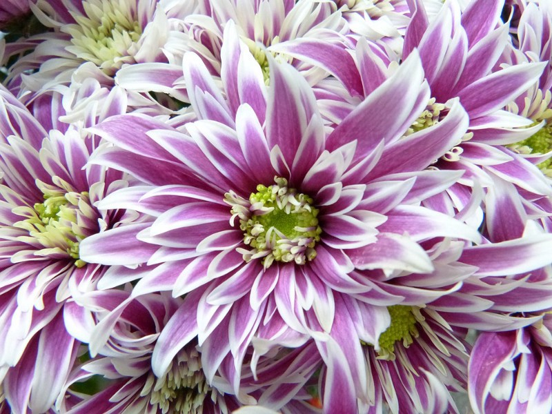 Pretty purple flowers karen saddler medium did you know that purple is one of the most popular types of flowers there are seemingly endless varieties of this color that boasts so much depth and mightylinksfo