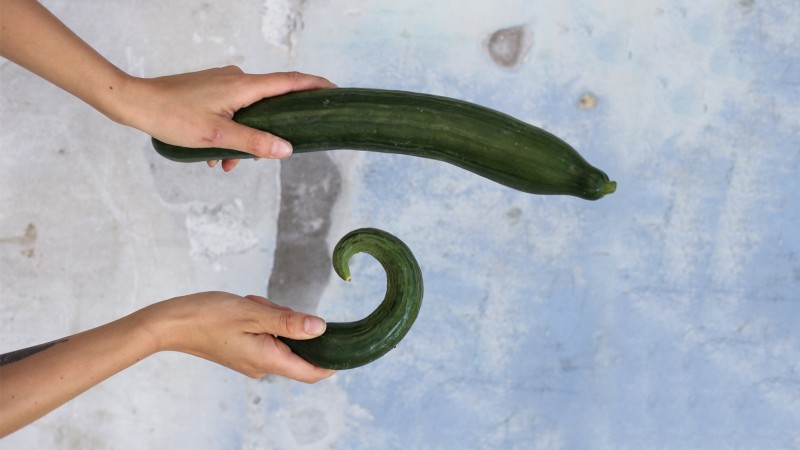 A person holding two curvy cucumbers