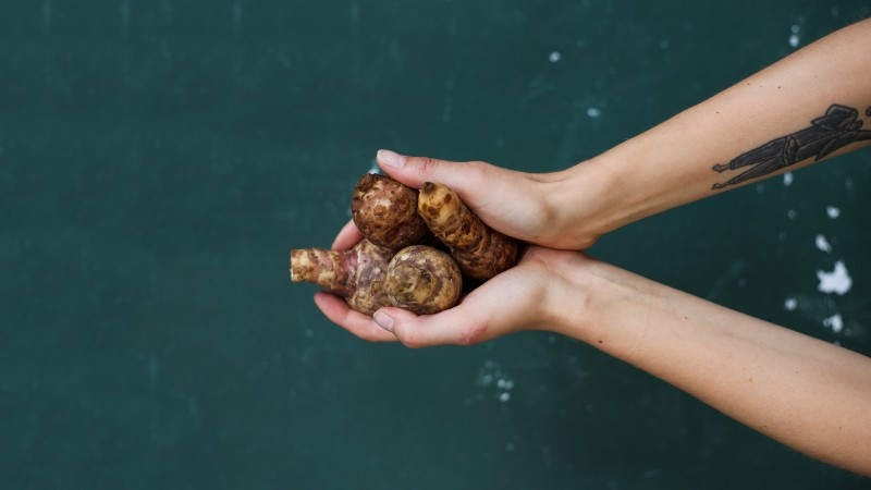 A person holding a handful of jersusalem artichokes